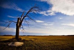 lonely_tree-ed